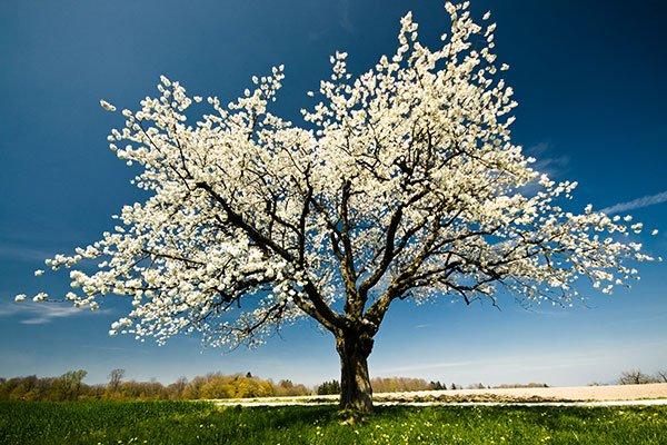 Photo d'un arbre aux fleurs blanches sous un ciel gris. Sophrologie, Hypnose, Synergie sur Marseille